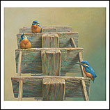 Kingfishers on the water wheel