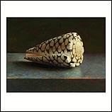 Rembrandt schelp
