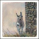 Donkey, Dormillouse (French Alpes…