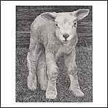 Freek's Lamb