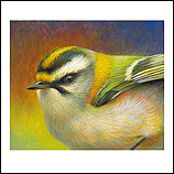 Portrait of a Firecrest