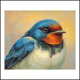 Portret van een zwaluw