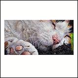 Cat Eyes 17