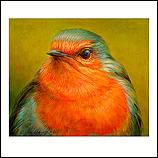 Portret van een Roodborst