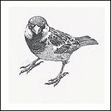 Museum sparrow