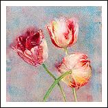 Rembrandt Tulips