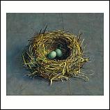 Abandoned blackbird nest