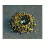 Abandoned blackbird nest