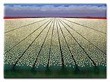 Magneet - White tulipfields
