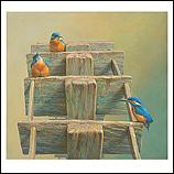 Eisvögel am Wasserrad