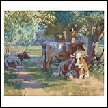 Koeien onder bomen