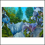 Doorkijk paarse Iris