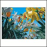 Daffodil lane