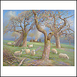 Sheep in the orchard