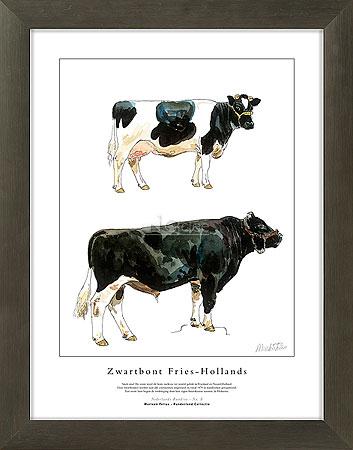 Zwartbont Fries-Hollands