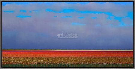 Red tulip fields