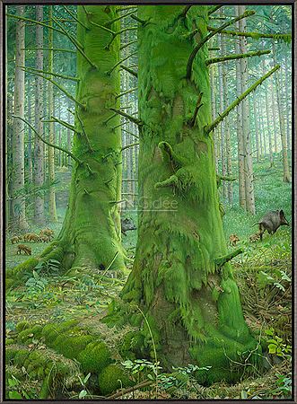 Het Mossenbos