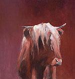 Schotse Hooglander rood