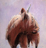 Highland Cattle in white