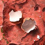 Egg on terracotta tile