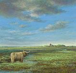 Highland Cattle in Groningen