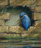 Resting Kingfisher