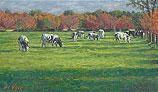 Koeien aan De Krommeweg