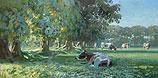 Koeien bij bomenrij in ochtendlic…