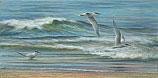 Three Terns