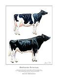 Holstein-Friesian