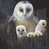Nesting barn owls