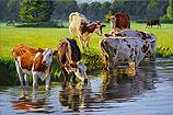 Roodbont vee langs de rivier