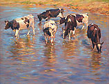 Cattle cooling down