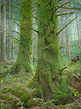 The Moss Forest