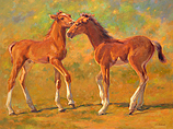 Two playful young foals
