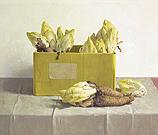 Witlof in gele doos