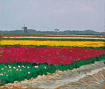 Tulpenveld bij Callantsoog