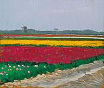 Tulip fields near Callantsoog
