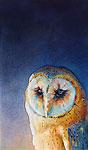 Barn owl III