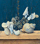 Hydrangea and Shell