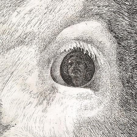 Aloy detail oog