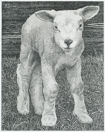 Freek's Lamb