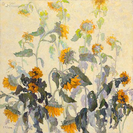 Zonnebloemen wit