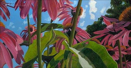 Aechinacea met blad