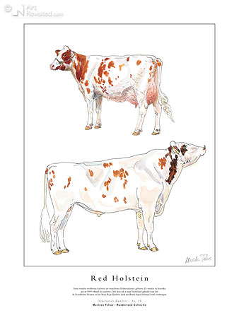 Red Holstein