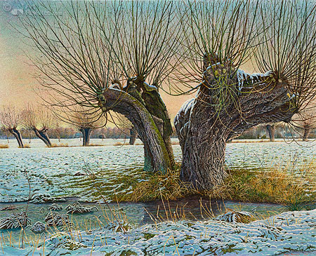 Knotwilg in de winter