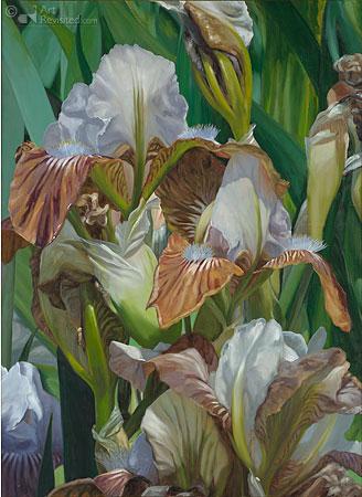 Gekleurde lelies in kweekbed
