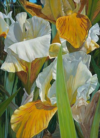 Kweekbed Iris