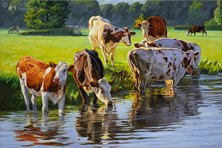 Red and white Holstein cattle drinking from a stream