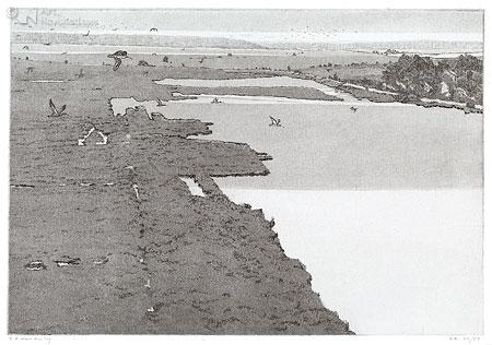 Vogeltrek (wulpen) Fochteloërveen